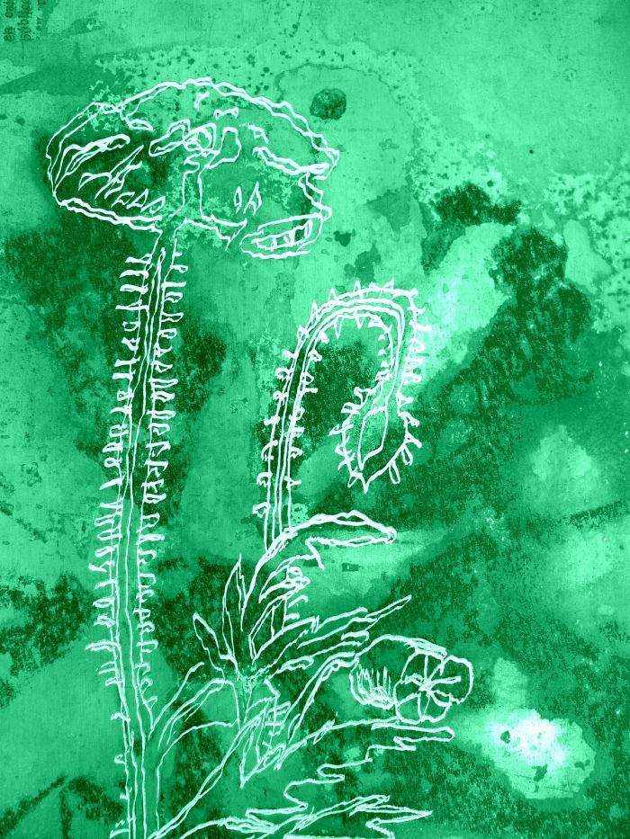 Matria_herbarium