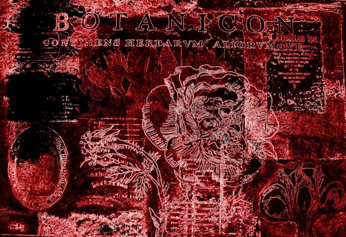 foto y manipulación digital de Botánicos